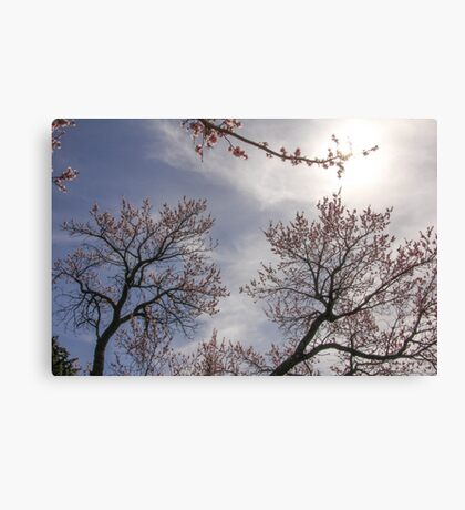 Spring Time and Tree Blossoms Canvas Print