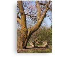 Old Tree and Bench Canvas Print