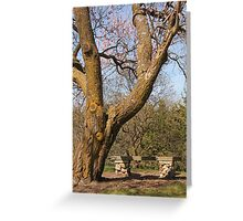 Old Tree and Bench Greeting Card
