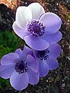 Passionately Purple by Tamara Valjean