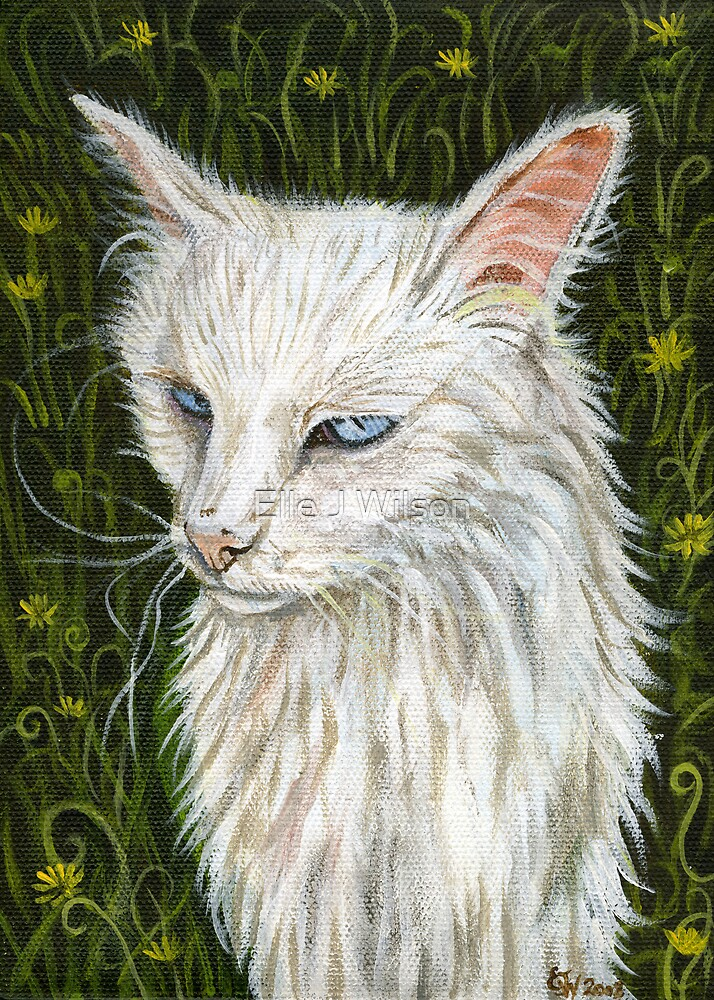 Stray Cat with Blue Eyes. by Elle J Wilson