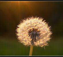 Closeup of a spongy flower by Venkatesh Babu