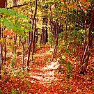 A Walk Through Autumn by Tina Longwell