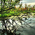 Tree Reflexion by terrebo