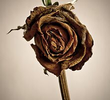A rose is a rose by Martin Bosch