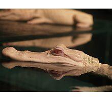 White Gator Photographic Print