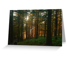Samuel H Boardman State Park, Curry County, Oregon, USA Greeting Card