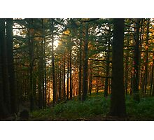 Samuel H Boardman State Park, Curry County, Oregon, USA Photographic Print