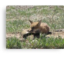 There goes the neighborhood (baby foxes) 05 Canvas Print