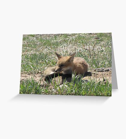 There goes the neighborhood (baby foxes) 05 Greeting Card