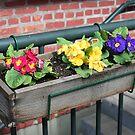 """""""Flower Box"""" by Lynn Bawden"""