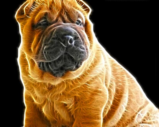 Shar Pei by Beverly Lussier
