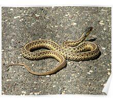 Snake 2 full body Poster