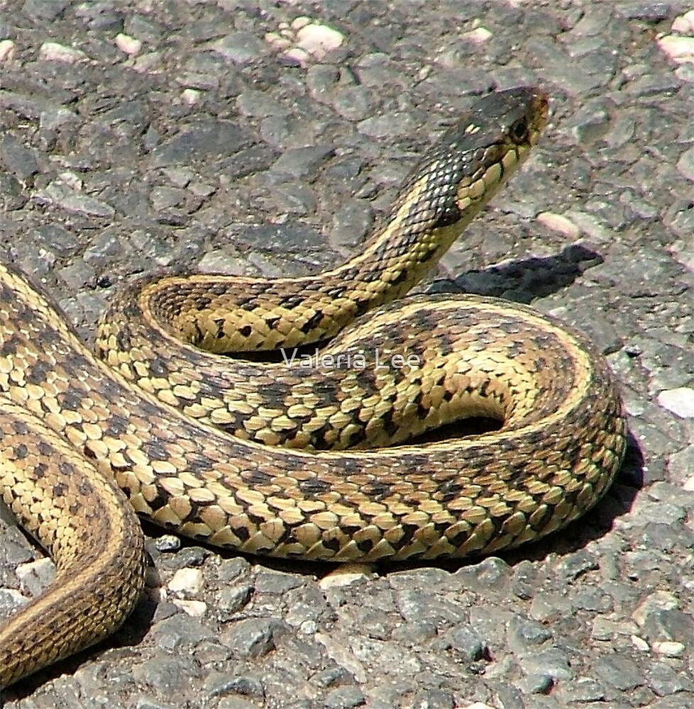 Snake by Valeria Lee