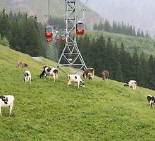 Mt Pilatus, Switzerland by Cathy Grieve