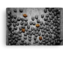 Always one or two in a crowd..... Canvas Print