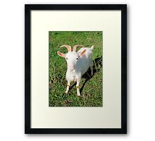 Billy 'The Goat' Framed Print