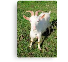 Billy 'The Goat' Canvas Print