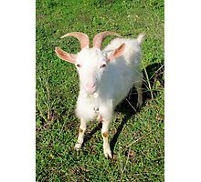 Billy 'The Goat' Photographic Print