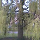 Weeping Willow by Daisy500