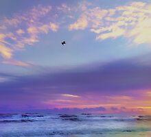 Florida Sunrise - New Smyrna Beach by Joann Vitali