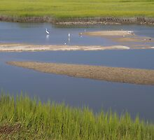 South Carolina Marsh by bcollie