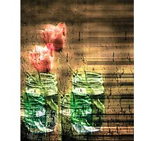 Canned Tulips  Photographic Print
