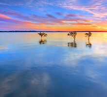 3 Trees - Wellington Point Qld Australia by Beth  Wode