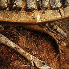 14.4.2015: Dead Pike by Petri Volanen