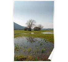 Wetlands Near Planina Poster