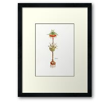 Fritillaria imperialis (Crown imperial) Botanical Framed Print