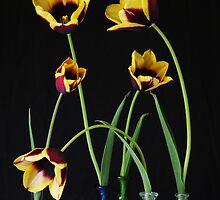 Five Tulips by Gabrielle Battersby