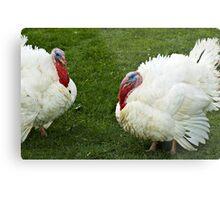 Turkeys' conversation Metal Print