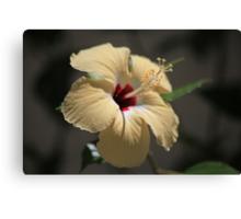 Hibiscus in cream Canvas Print
