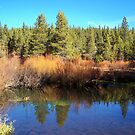 Trout Creek in the Fall by CherylBee