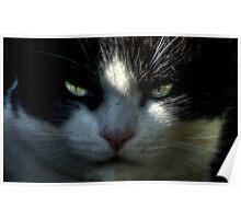Jeff Lemowski: Top Cat Poster