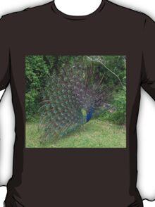 Peacock in yard T-Shirt