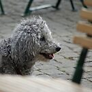 Dog at the café by Paola Svensson