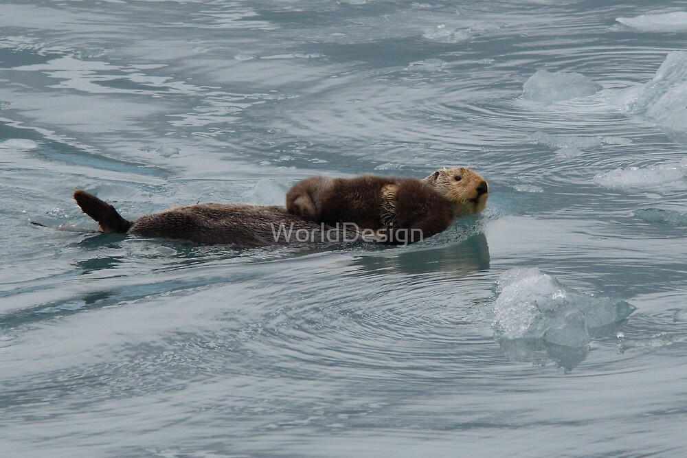 Sea Otter & Pup by Sheri L Gladish