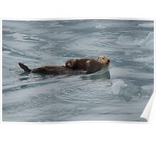 Sea Otter & Pup Poster