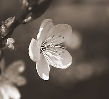 The bloom of another day by BettinaSchwarz