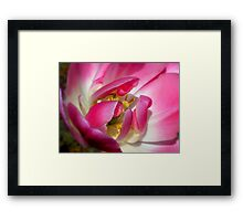 Tulip Heart Framed Print