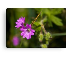 Dove's-foot Crane's-bill Canvas Print
