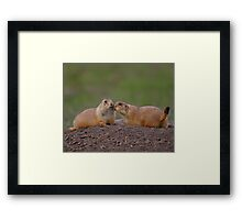 Prairie Dog Kiss Framed Print