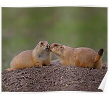 Prairie Dog Kiss Poster