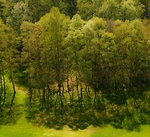 Trees and yet more trees by Matt Sillence