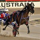 Harness racing by Cathy Cormack