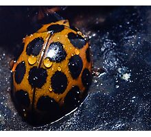 Lady Beetle Macro  Photographic Print