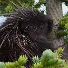 Porcupine Hug by WorldDesign