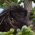 Porcupine Hug by William C. Gladish